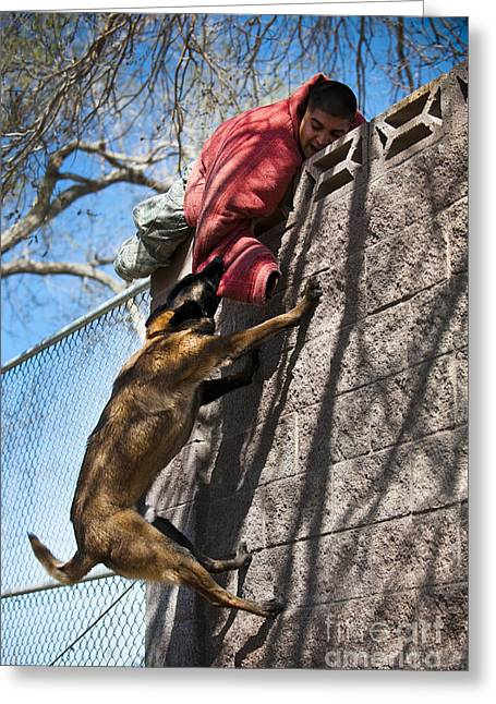 A Military Working Dog Climbs A Wall Greeting Card by Stocktrek Images