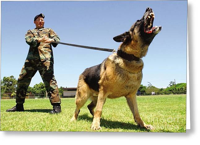 Dog Handler Greeting Cards - A Military Working Dog Shows His Teeth Greeting Card by Stocktrek Images