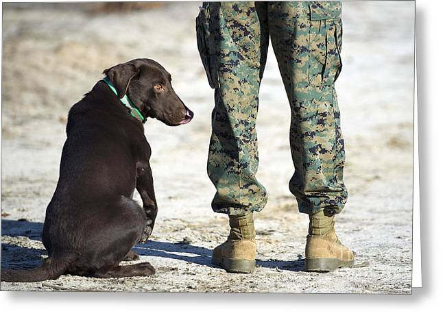 Working Dog Greeting Cards - A Military Working Dog Waits Greeting Card by Stocktrek Images