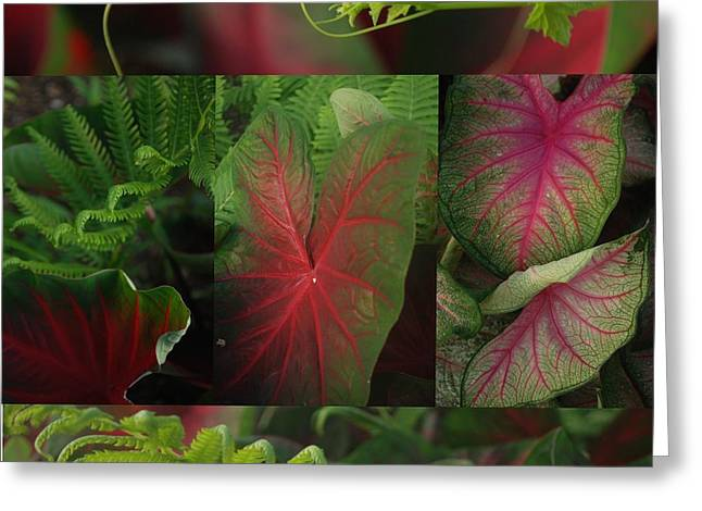 Calladiums Greeting Cards - A Mosaic of Red and Green Calladium Leaves Greeting Card by Jennifer Holcombe