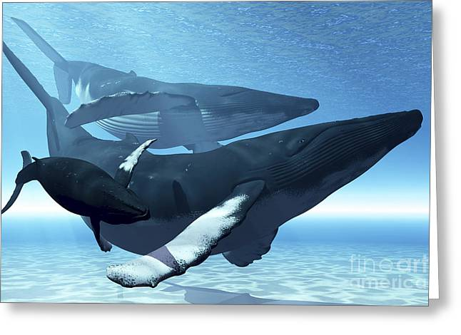 Caring Mother Digital Greeting Cards - A Mother Humpback Whale Is Escorted Greeting Card by Corey Ford
