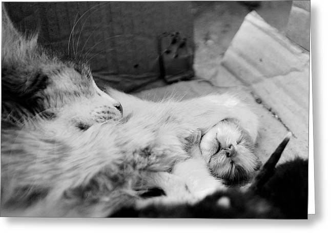 Cat Paw Greeting Cards - A Mothers Paw Greeting Card by Dean Harte