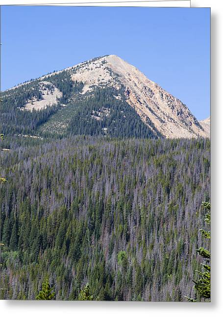 Heavenly Greeting Cards - A mountain peak and trees damaged by pine beetles at Rocky Mount Greeting Card by Ellie Teramoto