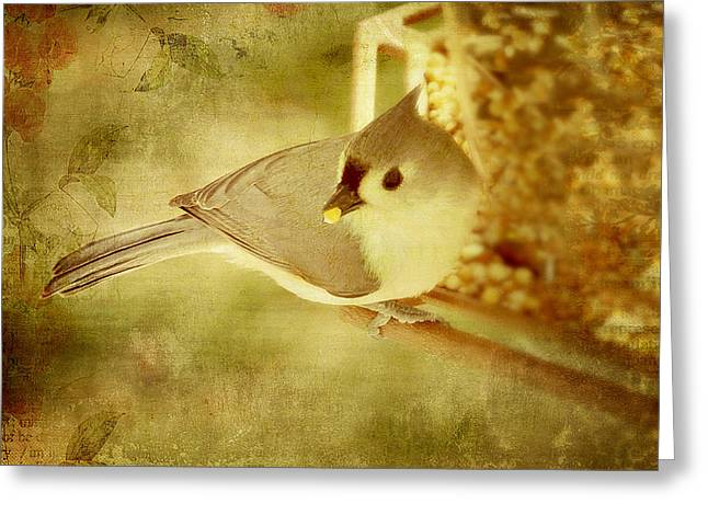 Bird-feeder Greeting Cards - A Mouthful Greeting Card by Kathy Jennings
