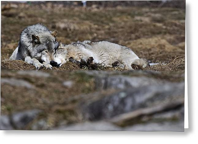 Animal Photography Greeting Cards - A Much Needed Rest Greeting Card by Michael Cummings