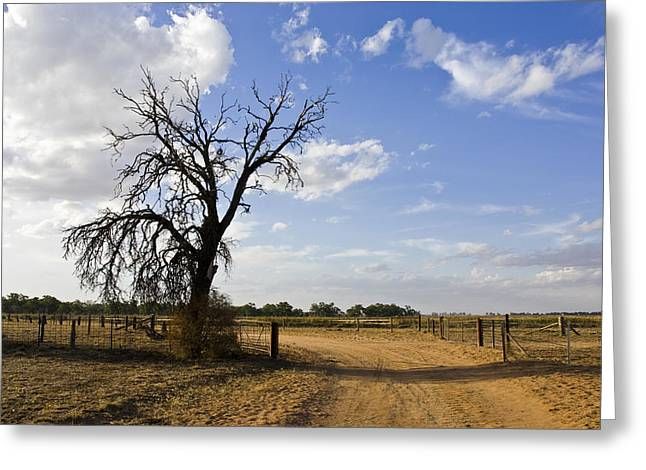 Plant Growth And Decay Greeting Cards - A Murray Darling Basin Farm Track Greeting Card by Jason Edwards