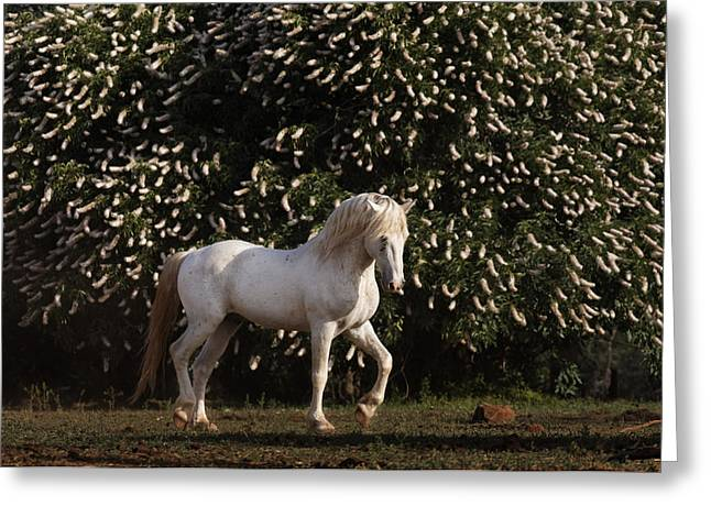 Wild Horse Greeting Cards - A Mustang Stallion In The Wild Horse Greeting Card by Melissa Farlow