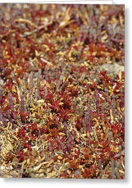 A Myriad Of Bright Red And Orange Greeting Card by Jason Edwards