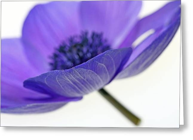 Purple Floral Greeting Cards - A-Nemone Greeting Card by Rebecca Cozart