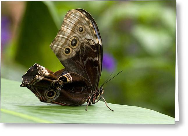 Butterflies Pyrography Greeting Cards - A New Day Greeting Card by Carole Wood