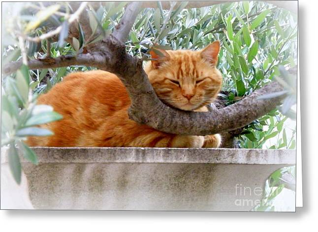Lainie Wrightson Greeting Cards - A Nice Napping Spot Greeting Card by Lainie Wrightson