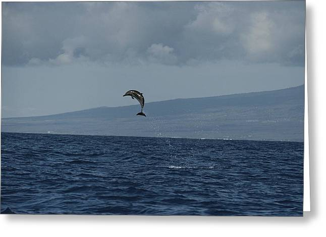 Take Action Greeting Cards - A Pacific Spotted Dolphin Leaps High Greeting Card by Bill Curtsinger