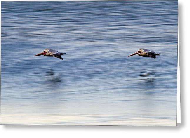 Emma Greeting Cards - A Pair Of Brown Pelicans Flying Greeting Card by Rich Reid
