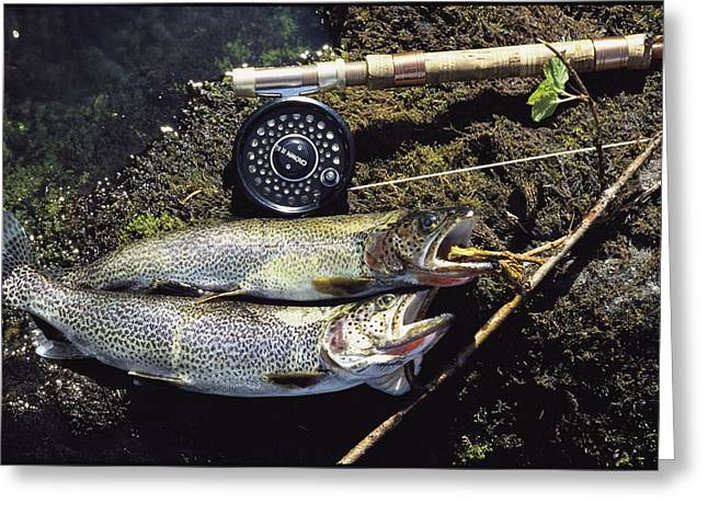 Cutthroat Greeting Cards - A Pair Of Cutthroat Trout, Salmo Greeting Card by Bill Curtsinger