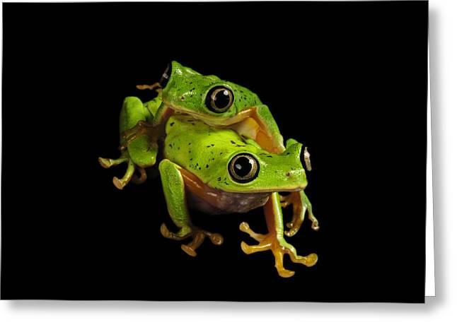 Leaf Frog Greeting Cards - A Pair Of Endangered Lemur Leaf Frogs Greeting Card by Joel Sartore