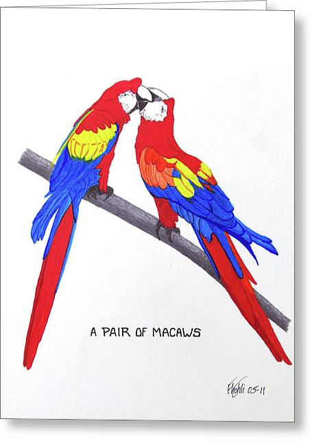 Ink Greeting Cards - A Pair Of Macaws Greeting Card by Frederic Kohli
