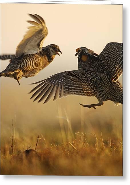 Tallgrass Prairie National Preserve Greeting Cards - A Pair Of Prairie Chickens Face Greeting Card by Jim Richardson
