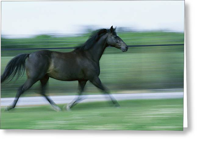 Panned Views Greeting Cards - A Panned View Of A Black Horse Running Greeting Card by James L. Stanfield