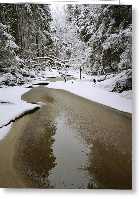 Woodland Scenes Greeting Cards - A Partially Frozen Stream Runs Greeting Card by Mattias Klum
