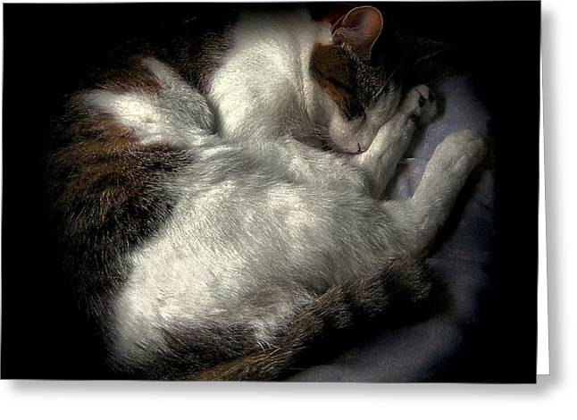 Felines Dale Ford Greeting Cards - A Patch of Sun 2 Greeting Card by Dale   Ford