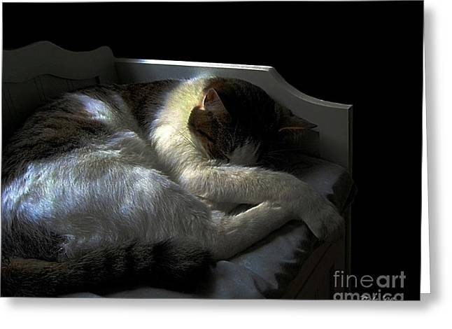 Felines Dale Ford Greeting Cards - A Patch of Sun Greeting Card by Dale   Ford