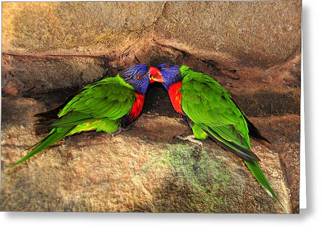 Tropical Wildlife Greeting Cards - A perfect pair Greeting Card by David Lee Thompson