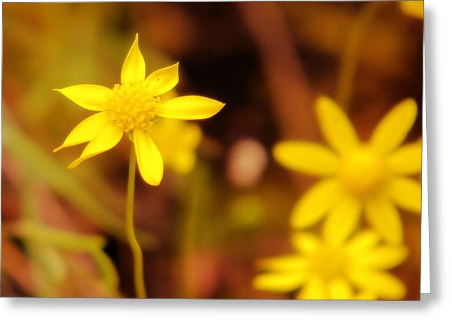 Oregon Wild Life Greeting Cards - A Perky Yellow Flower Greeting Card by Jeff  Swan
