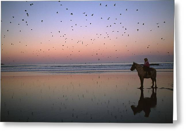 Silhouettes Of Horses Greeting Cards - A Person On Horseback On The Beach Greeting Card by Joel Sartore