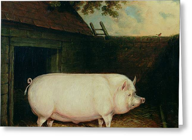 Outdoors Paintings Greeting Cards - A Pig in its Sty Greeting Card by E M Fox