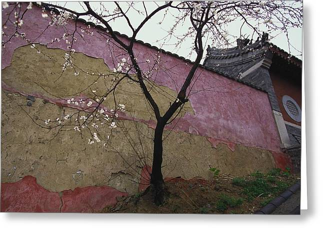 Chinese Architecture And Art Greeting Cards - A Plum Tree Near The Miao Fengshan Greeting Card by Raymond Gehman