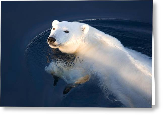 Best Sellers -  - Ocean Mammals Greeting Cards - A Polar Bear Glance Greeting Card by Ira Meyer
