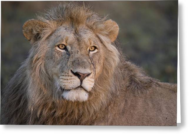Cat Images Greeting Cards - A Portrait Of A Scar Faced African Male Greeting Card by Michael Poliza