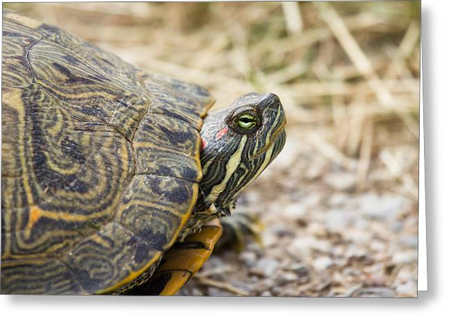 Wetland Greeting Cards - A portrait of reptiles in Texas - Tortoise Greeting Card by Ellie Teramoto