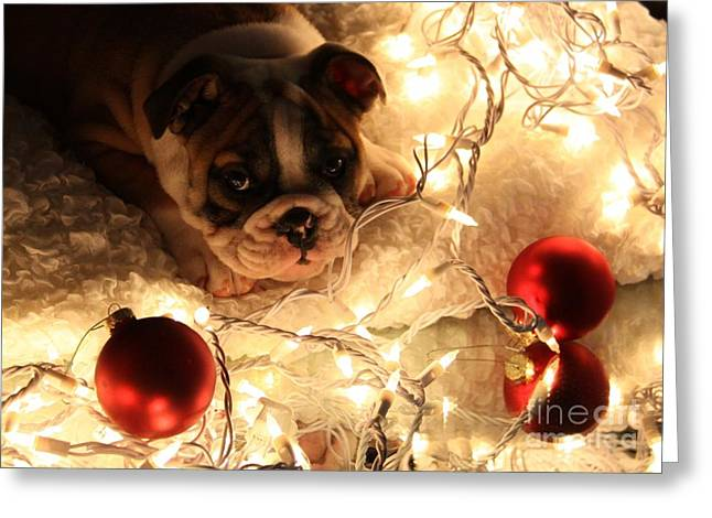 Puppies Photographs Greeting Cards - A Puppy For Christmas Greeting Card by Gayle Johnson