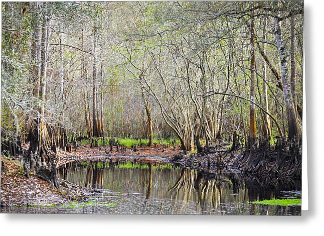 Living Life Photography Greeting Cards - A Quiet Back Woods Place Greeting Card by Carolyn Marshall