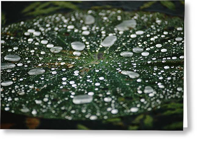 Hematite Greeting Cards - A Raindrop-covered Water Lily Floats Greeting Card by Raymond Gehman