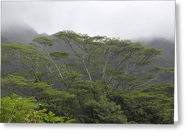 Manoa Falls Greeting Cards - A Rainforest In Honolulu, Hawaii Greeting Card by Stacy Gold