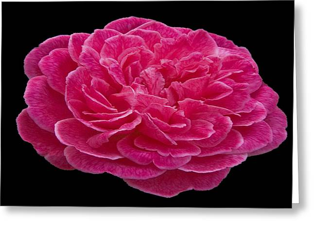 Floral Photographs Pastels Greeting Cards - A red rose for you Greeting Card by Dennis Dugan