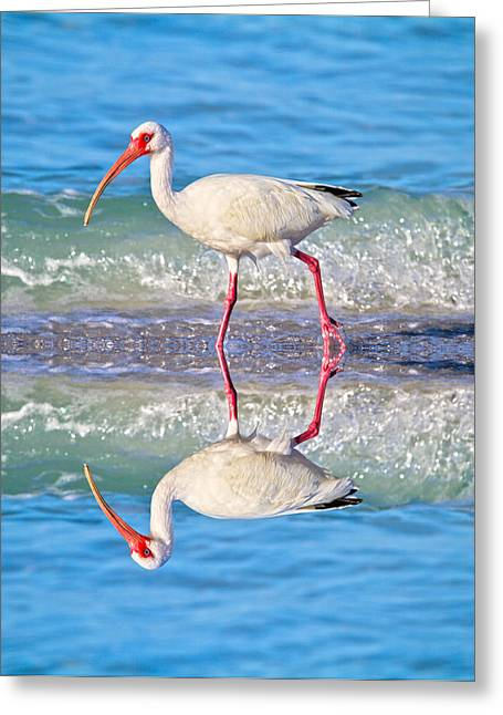Vacation Spots Greeting Cards - A Reflective Walk Greeting Card by Betsy A  Cutler