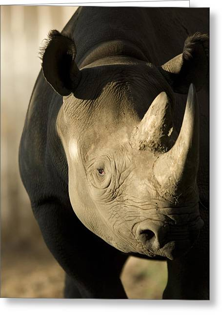 One Horned Rhino Greeting Cards - A Rhinoceros At The Sedgwick County Zoo Greeting Card by Joel Sartore