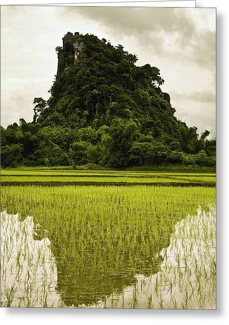A Rice Field In Asia Greeting Card by Nathan Lau