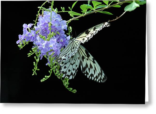 Rice Paper Greeting Cards - A Rice Paper Butterfly Idea Idea Visits Greeting Card by Darlyne A. Murawski