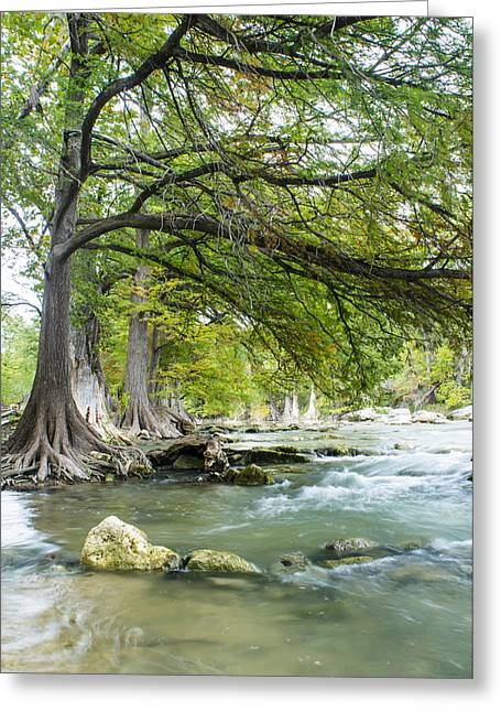 Cypress Tree Greeting Cards - A river under bald cypress trees Greeting Card by Ellie Teramoto