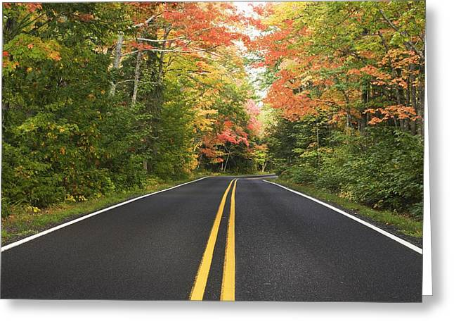 Yellow Line Greeting Cards - A Road Lined With Trees In Autumn Greeting Card by Susan Dykstra