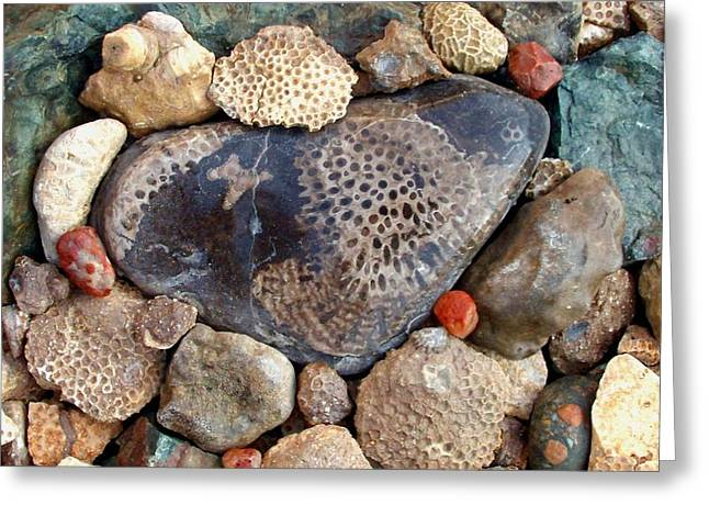 Agate Beach Greeting Cards - A Rock Hunters Dream Greeting Card by Ted Lepczynski