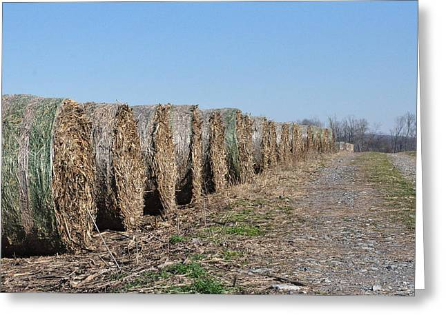Bale Digital Greeting Cards - A Roll in the Hay Greeting Card by Bill Cannon