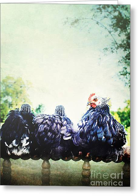 Fluffy Chickens Greeting Cards - A Rooster and His Girls Greeting Card by Stephanie Frey
