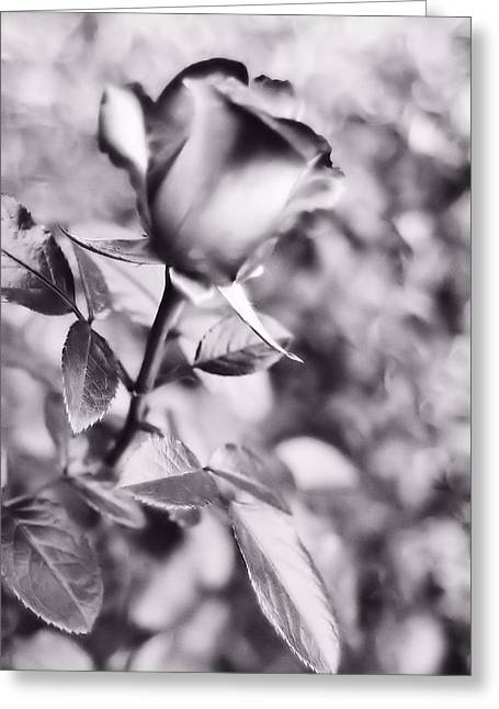 Lynnette Johns Greeting Cards - A Rose By Any Other Name Greeting Card by Lynnette Johns