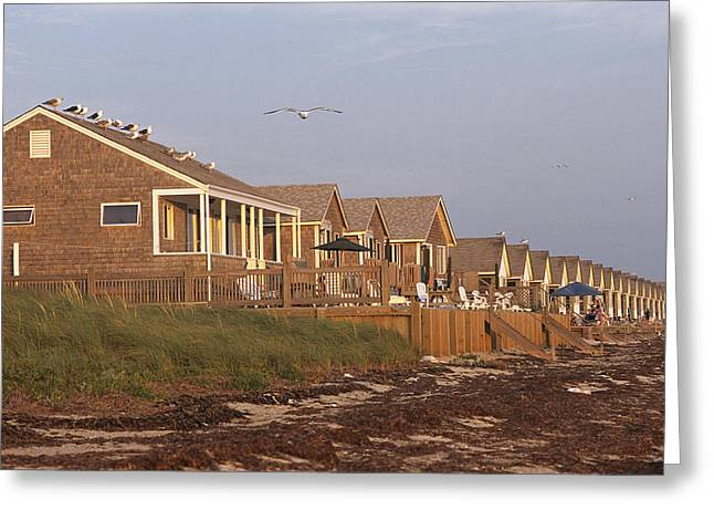 Cottages In England Greeting Cards - A Row Of Rental Cottages On A Seaweed Greeting Card by Darlyne A. Murawski