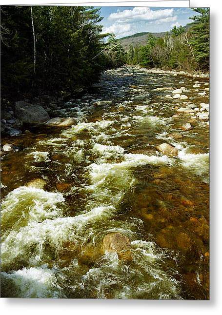 Trout Fishing Greeting Cards - A Rush Greeting Card by Skip Willits
